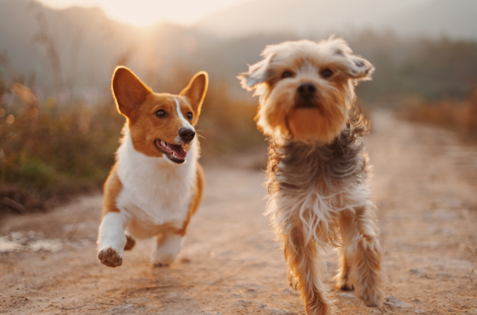 The best glucosamine for dogs in UK 2021