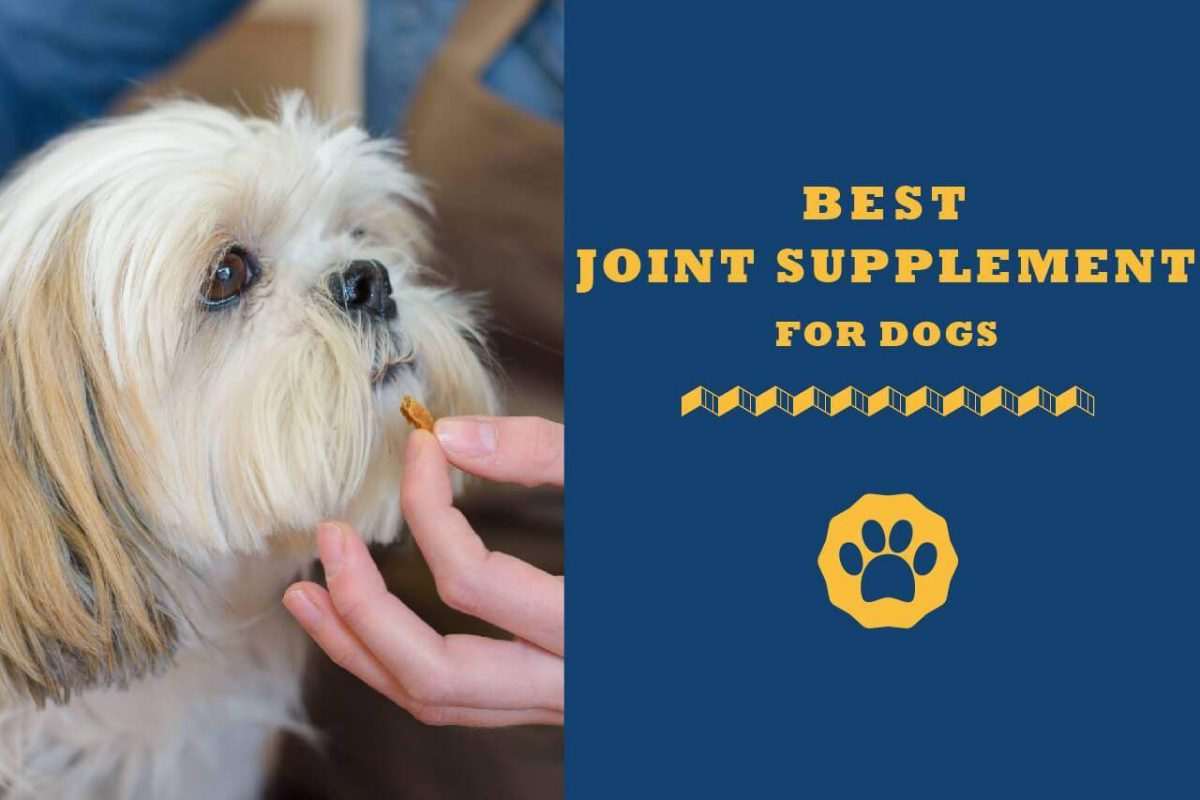 Top 10 best joint supplement for dogs